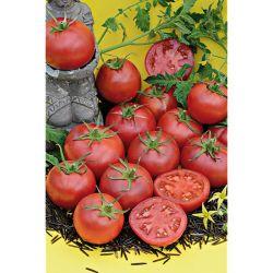 Tomate Cerise Greffée Black Cherry