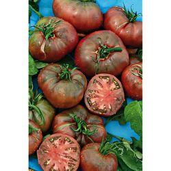 Tomate Greffée f1 Defiant