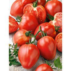 Tomate Greffée f1 Tiverta