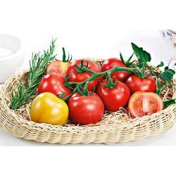 Tomate Greffée f1 Shimmer