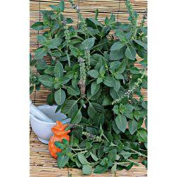 COMBAVA ou KAFFIR (citrus hystrix) Bio