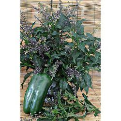 Amaryllis De Jardin Sonatini Veneto