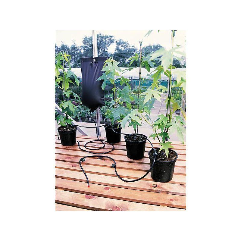 AMARYLLIS de jardin SONATINI PINK RASCAL