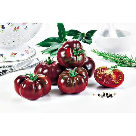 TOMATE NOIRE RUSSE