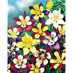 Engrais Rosiers &Amp; Fleurs