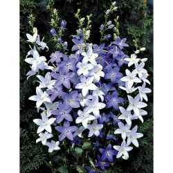 Engrais Bâtonnets Plantes Fleuries