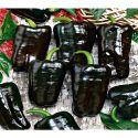 PIMENT TEPIN ou piment poivre (C. ANNUUM VAR. GLABRIUSCULUM)
