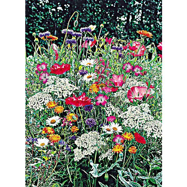 Calendrier lunaire 2020 graines et plantes calendrier - Graines et jardin calendrier lunaire ...