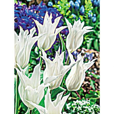 TULIPE fleur de lis TRÈS CHIC