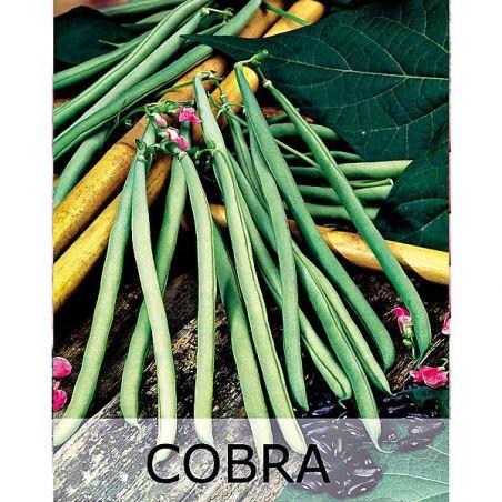 HARICOT ramant COBRA Bio