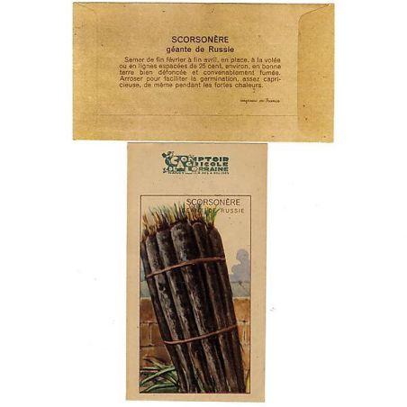 SCORSONÈRE DUPLEX ou GÉANTE WESTLANDIA type géante noire de Russie