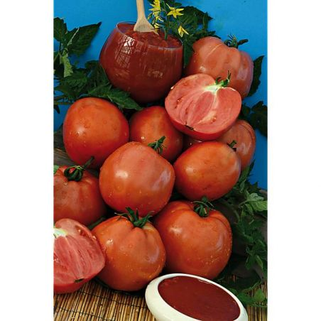 TOMATE F1 SUPERSAUCE