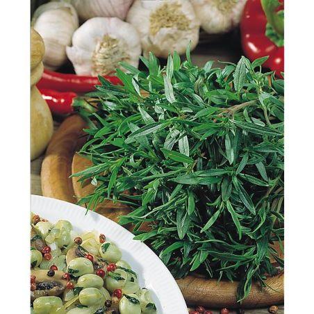 SARRIETTE annuelle AROMATA (satureia hortensis)