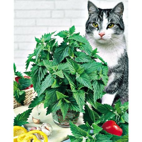 CATAIRE pour CHATS (nepeta cataria)