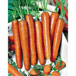 Reine-Marguerite King Size Apricot