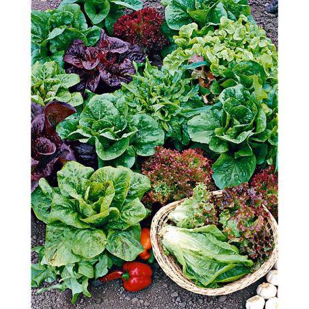 ENGRAIS SALADES, mâche, épinard et autres légumes feuilles