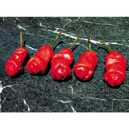PIMENT PETER PEPPER RED