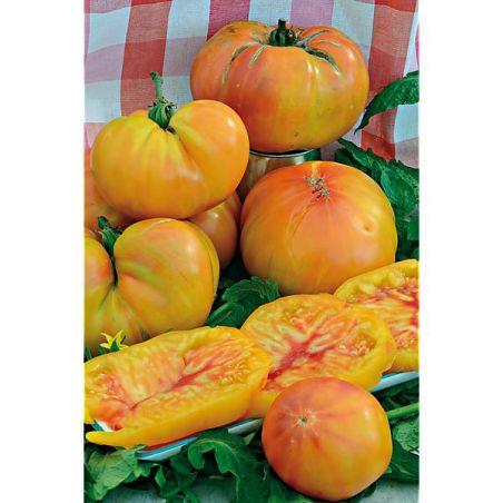 TOMATE SERENDIPITY STRIPED