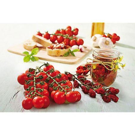 TOMATE raisin ARIELLE