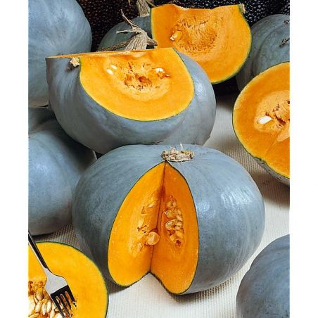 COURGE F1 CONFECTION
