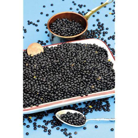 LENTILLE noire BELLUGA ou lentille caviar²