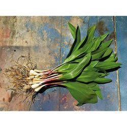 Chou-Fleur D'hiver f1 Belot