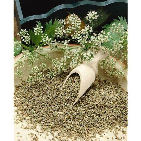 ANIS VERT (pimpinella anisum)
