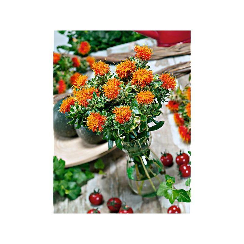 PÉTUNIA grandiflora F1 SUCCESS !® 360° ROUGE VIF