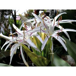 Dahlias Pompons Balles À Très Grandes Fleurs