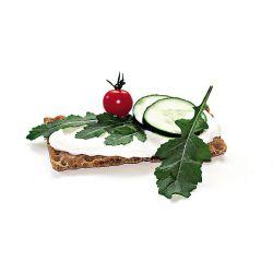 Laitue Romaine Verde D'inverno