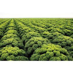 KIT 2 en 1 avec bac à plantes