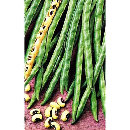 HARICOT nain DELL'OCCHIO (vigna unguicula)
