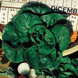 Ficelle Concombre Biodégradable Spécial Potager