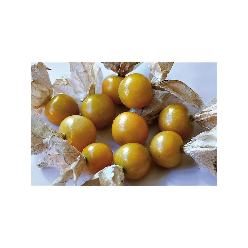 TOMATE F1 TOMBERRY® RED