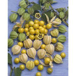 La Serre 4 Saisons Longueur X 4,5 Mètres (Soit 13,5 m²)