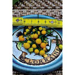 La Serre 4 Saisons Longueur X 9 Mètres (Soit 27 m²)