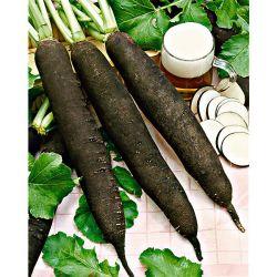 Outillage horticole outils mains graines baumaux - Plantoir a bulbes ...