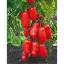 MANCHONS MULTI-PROTECTIONS TOMATES