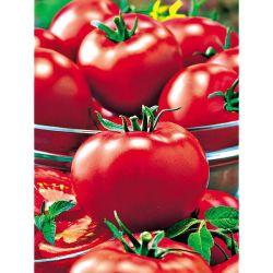 Filet De Protection Pour Fraises Et Petits Fruits