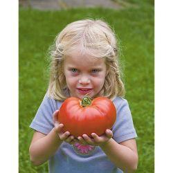 Melon f1 Artemis Bio