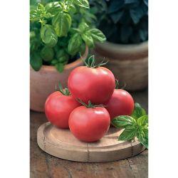 Melon f1 Pepito