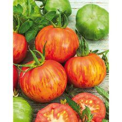 Melon f1 sv6234mc