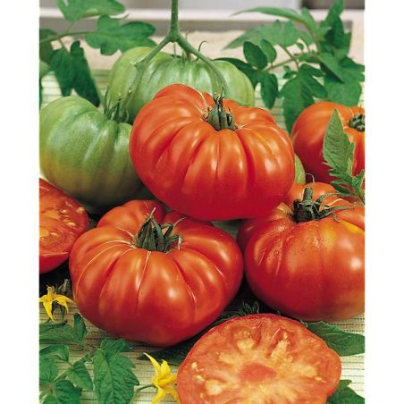 TOMATE F1 MARBONNE