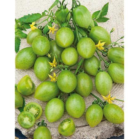 TOMATE GREEN GRAPE (raisin vert)