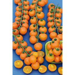 ANTI-LIMACES et ESCARGOTS SOLABIOL 750 grammes