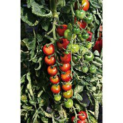 Réservoirs Souples Plant!T® 90 Litres