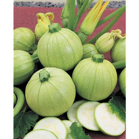 COURGETTE F1 ICE BALL