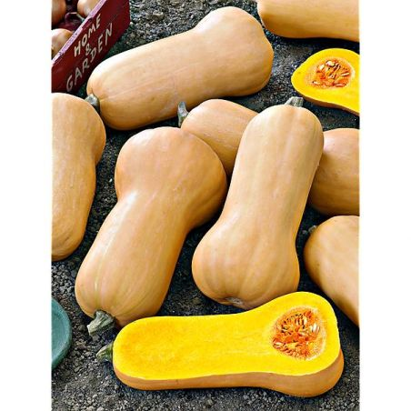 COURGE F1 ATLAS