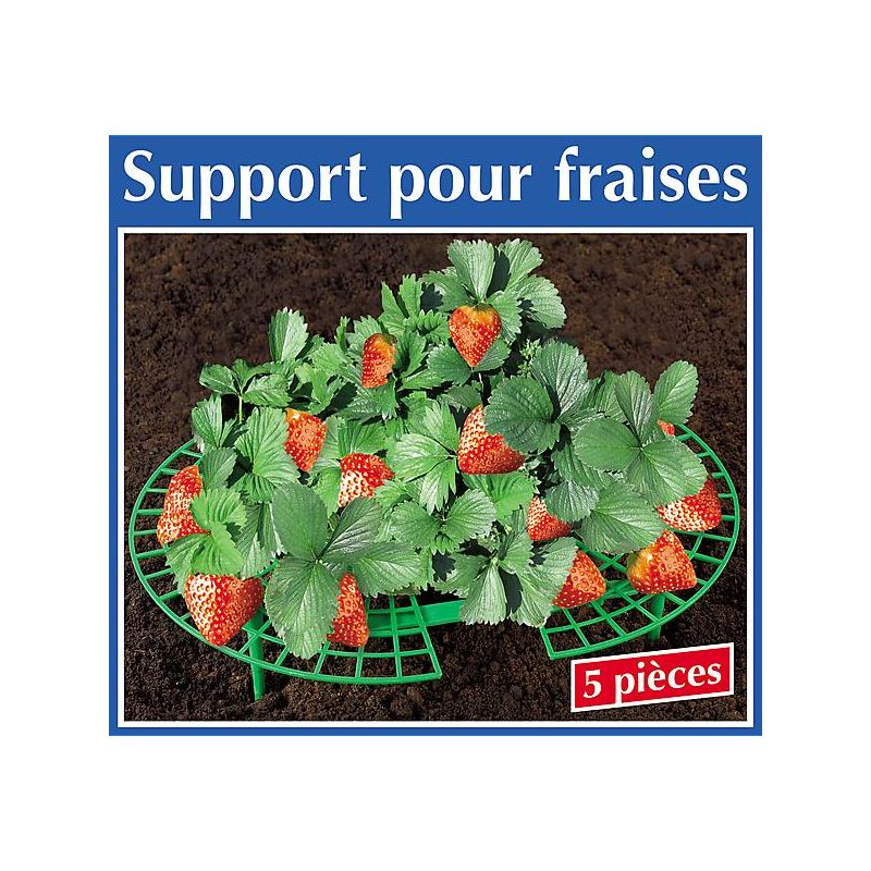 SARDINES pour CLOCHE SUNNY