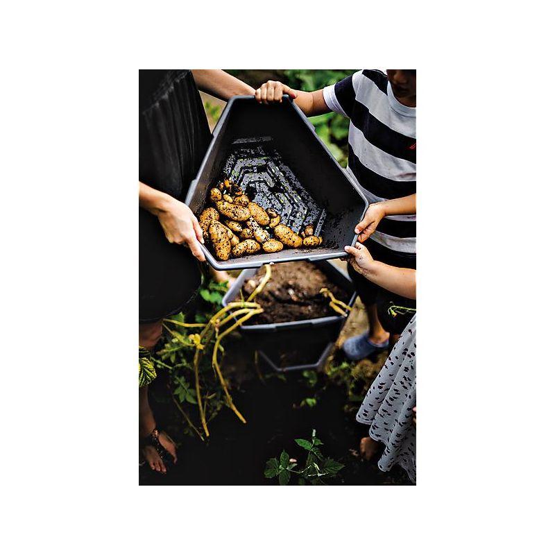 Hibiscus syriacus starburst chiffon graines baumaux - Hibiscus exterieur en pot ...